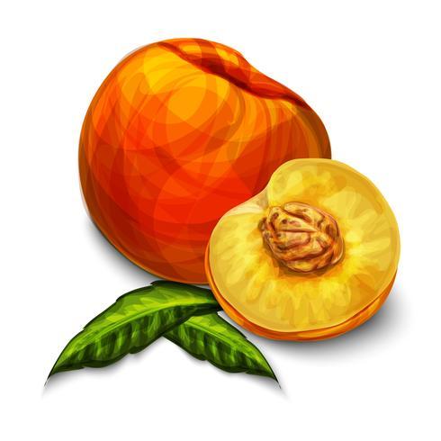 Orange natürliche organische Pfirsichfrucht vektor