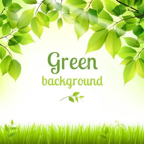 Natürlicher grüner neuer Laubhintergrund vektor