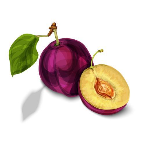 Blaue natürliche organische Pflaumenfrucht vektor