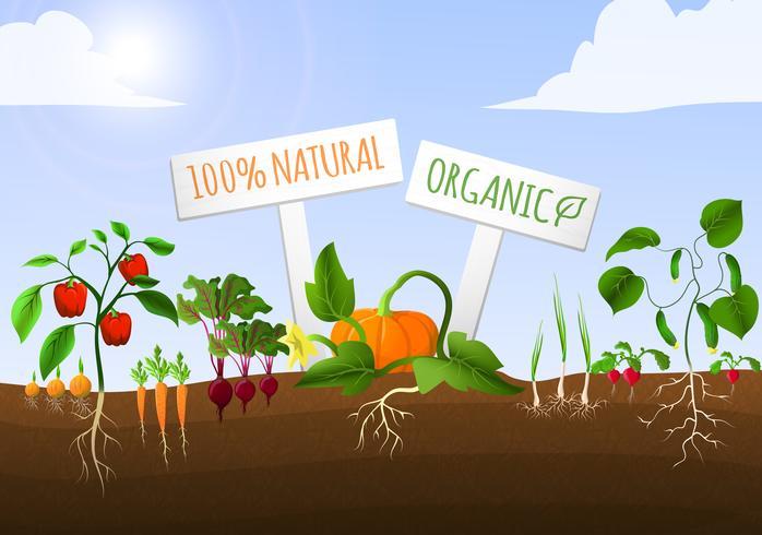 Vegetabilisk trädgårdspost vektor