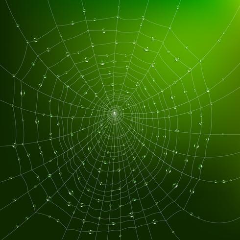 Spindelnät med droppar vektor