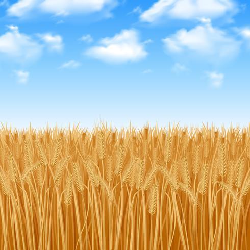 Vete fält bakgrund vektor