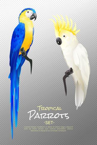 Realistische tropische Papageien eingestellt vektor
