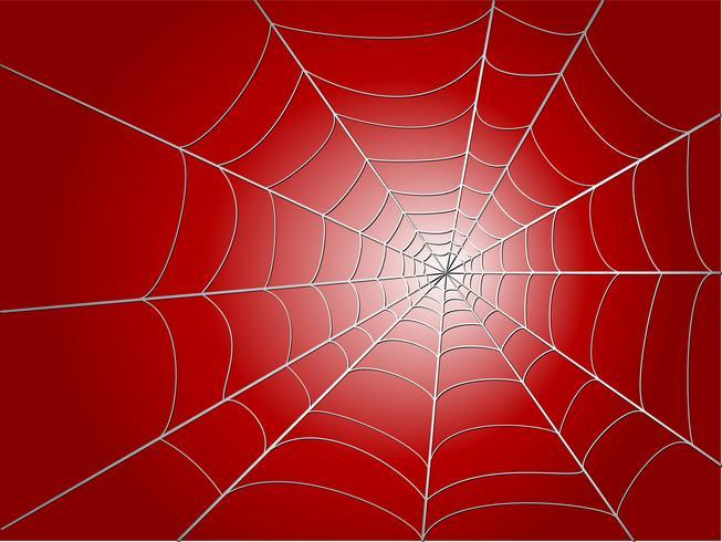 spindel wed vektor