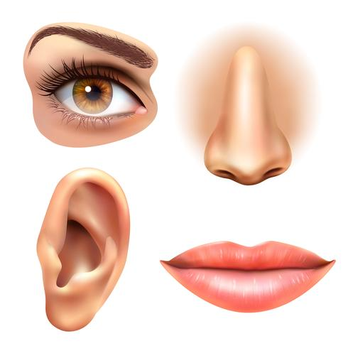 Ögon öron läppar Näsa ikoner Set vektor