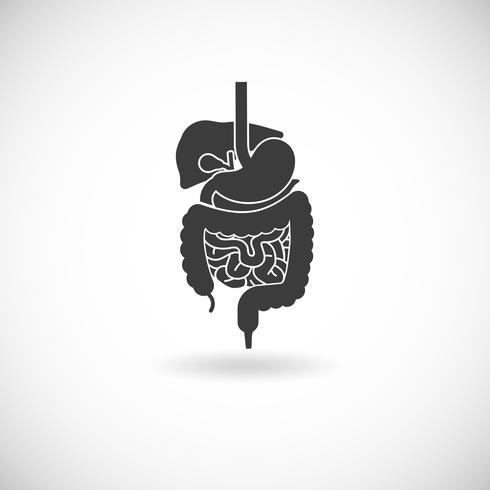 Digestive System Illustration vektor