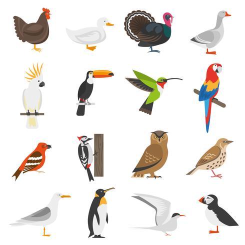 Vogel-flache Farbikonen eingestellt vektor