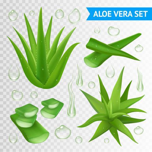 Aloe Vera Växt På Genomskinlig Bakgrund vektor