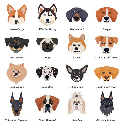 Reinrassige Hunde Gesichter Icon Set vektor