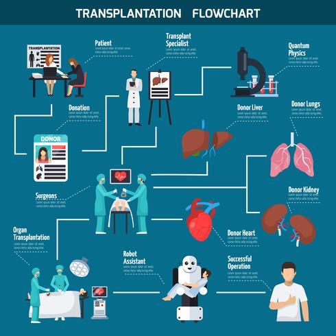 Transplantation Flowchart Layout vektor