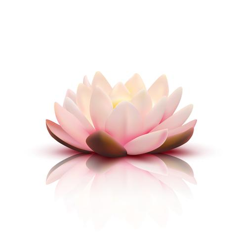 3D Blume von Lotus vektor