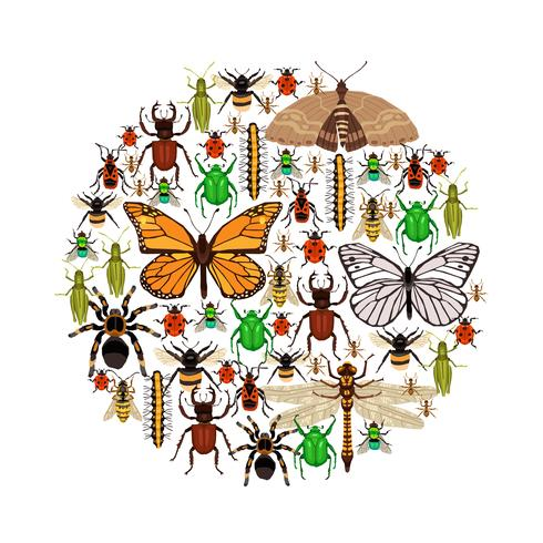 Insekter Vektorillustration vektor