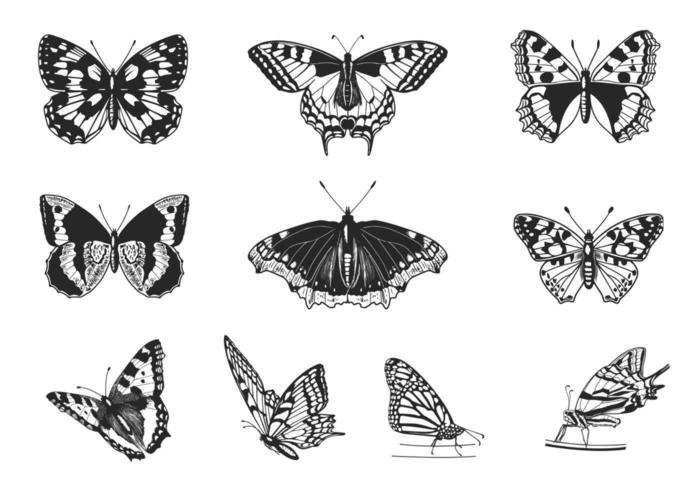 Schmetterling Vektor Pack