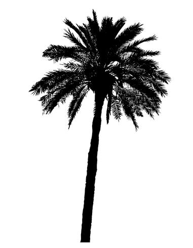 Schattenbild der realistischen Vektorillustration der Palmen vektor