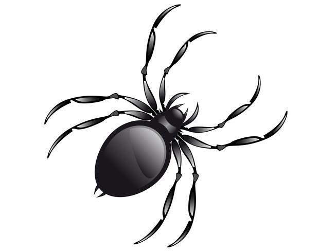 Spindel vektor