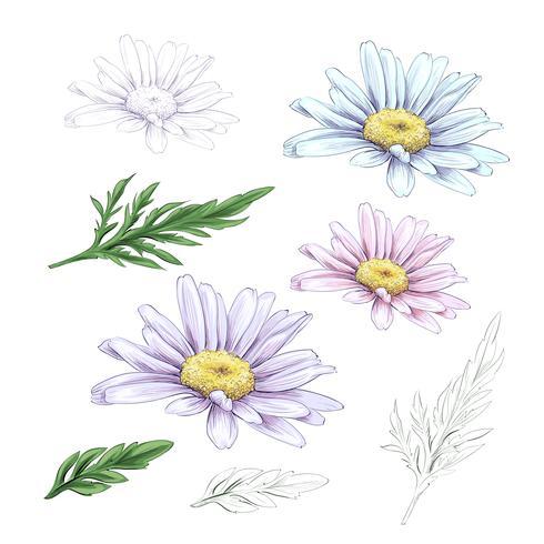 Daisyblomstring. Vektor handgjord inristad blommig uppsättning. Kamomill svart bläck skiss.