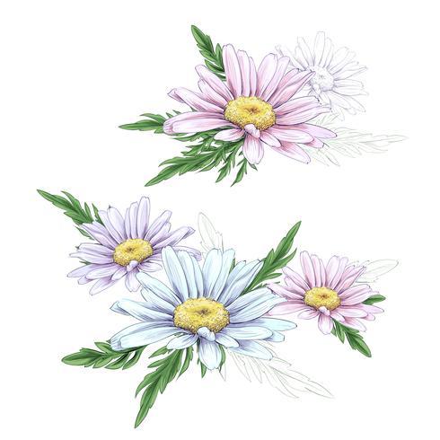Gänseblümchen-Blumenzeichnung. Vektorhand gezeichneter gravierter Blumensatz. Kamille schwarze Tinte Skizze. vektor