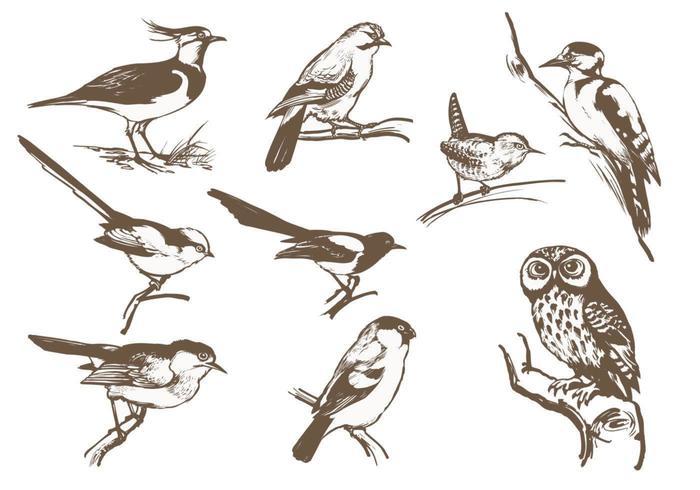 Etsat Bird Vector Pack