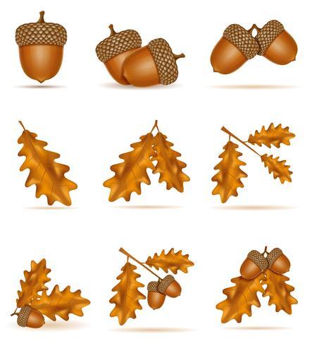 set ikoner höst ek ekollon med löv vektor illustration