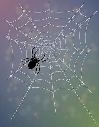 spindel webb vektor illustration