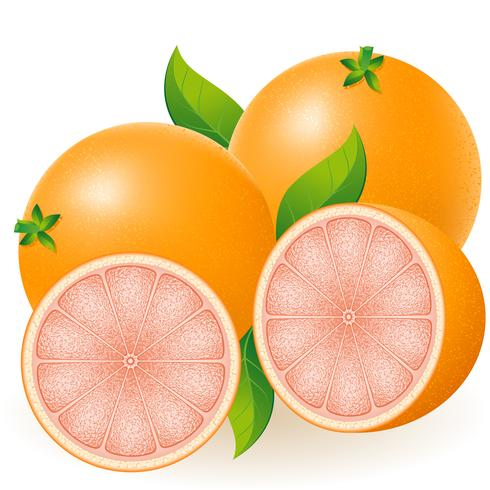 Grapefruit-Vektor-Illustration vektor