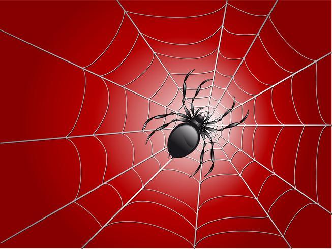 Spinne auf Mi vektor