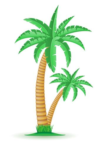 palm tropisk träd vektor illustration
