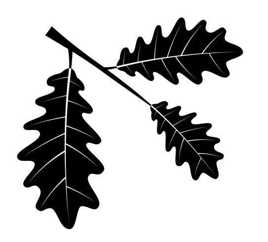ek lämnar svart kontur silhuett vektor illustration