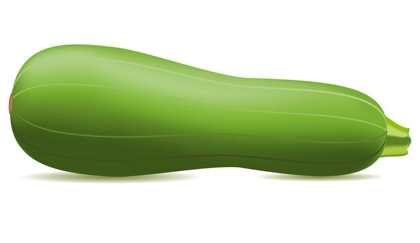 Zucchini-Vektor-Illustration vektor