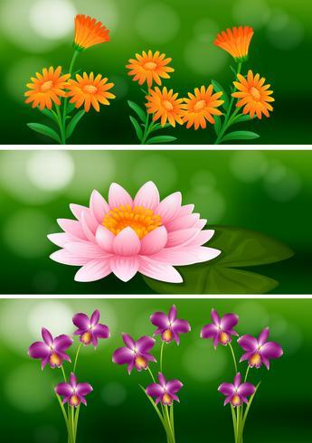 Hintergrunddesign mit verschiedenen Arten von Blumen vektor