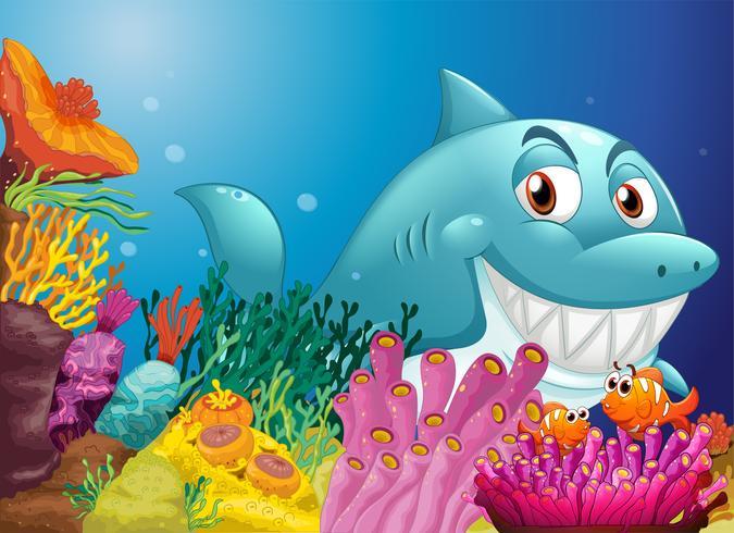 En stor haj nära korallrevet vektor