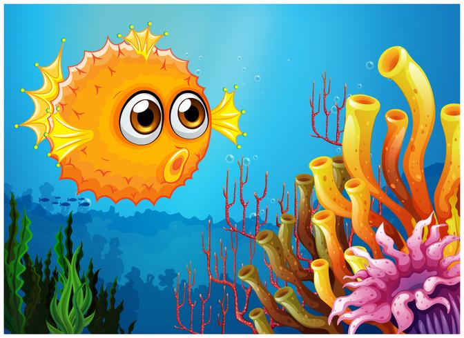 Ein Kugelfisch in der Nähe der Korallenriffe vektor