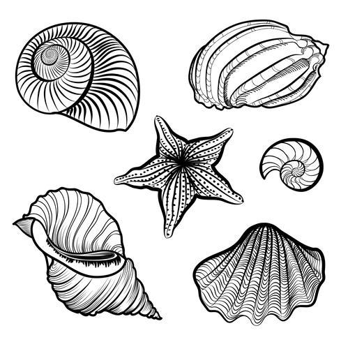 Olika snäckskal, sjöstjärna. Havskal marint liv ingraverat set vektor