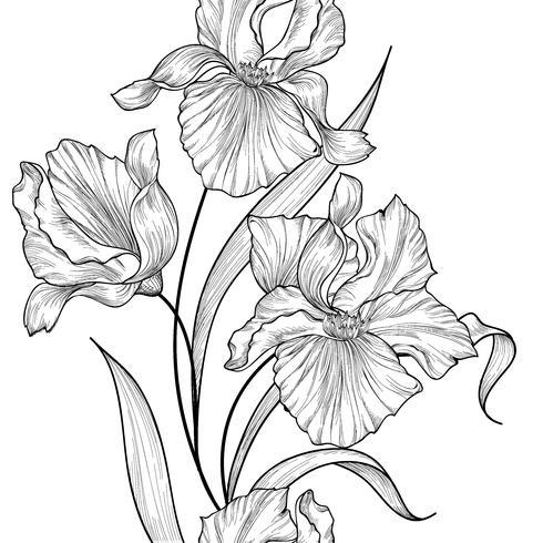 Blommigt sömlöst mönster. Blomma iris gravering bakgrund. vektor