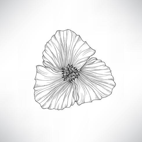Blomma isolerad. Blomra gravering illustration. Vektor uppsättning.