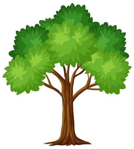 Grüner Baum auf weißem Hintergrund vektor