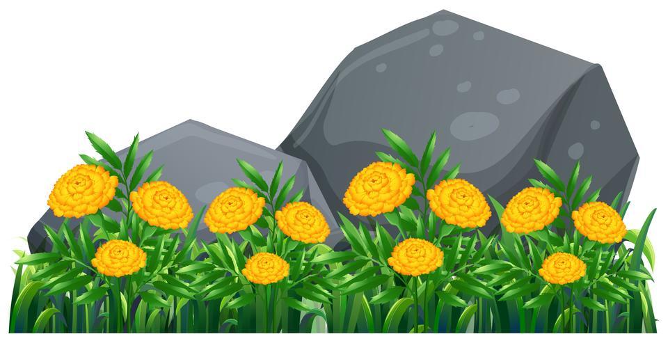 Ringelblumenblumen im Garten vektor