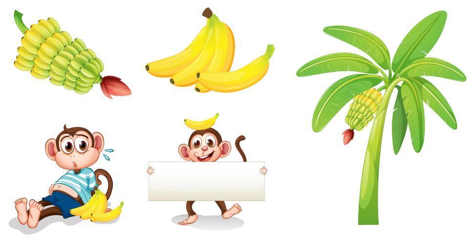 Bananen und Affen mit einem leeren Schild vektor