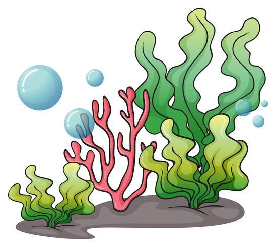 Algen unter dem Meer vektor