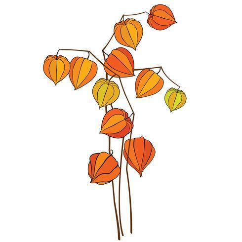Herbst-Symbol Herbstblätter und Beeren. Natursymbolwinter-Kirschblumenstrauß lokalisiert auf weißem Hintergrund. vektor