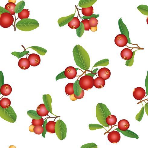 Tranbär sommar sömlösa mönster. Berry bakgrund. Blom- prydnad vektor