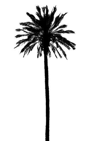 Silhouette der Palmen realistische Vektor-Illustration vektor