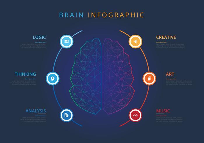 Menschliche Gehirnhälften Infografik vektor