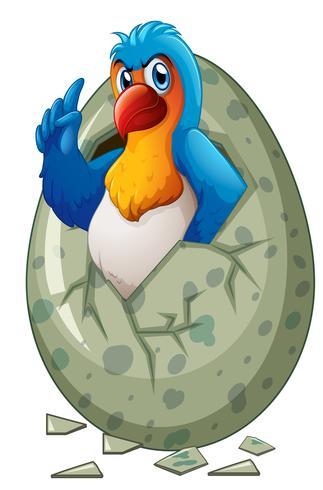 Baby macaw kläckning ägg vektor