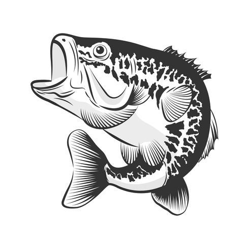 Bass Fisch Strichzeichnung Stil auf weißem Hintergrund. Gestaltungselement für Ikonenlogo, Aufkleber, Emblem, Zeichen und Markenkennzeichen Auch im corel abgehobenen Betrag. vektor