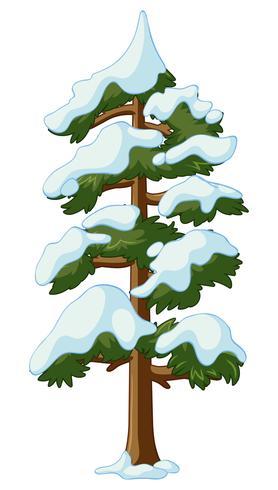 Pine tree täckt med snö vektor