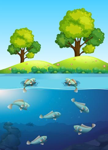 Fischen Sie im Fluss vektor
