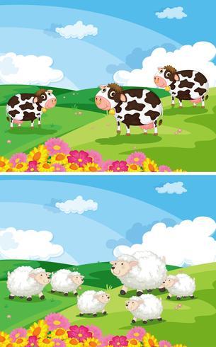 Kühe und Schafe auf den Feldern vektor