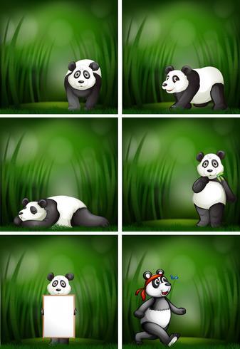 Eine Reihe von Panda vektor