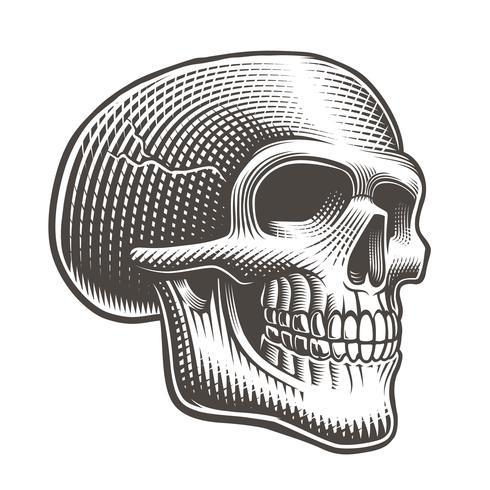 Vektor illustration av en skalle profil